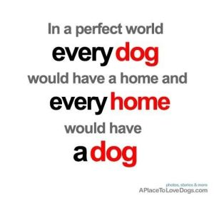 perfect world every home